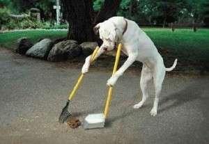 Aiuto Il Mio Cane Fa La Cacca In Casa