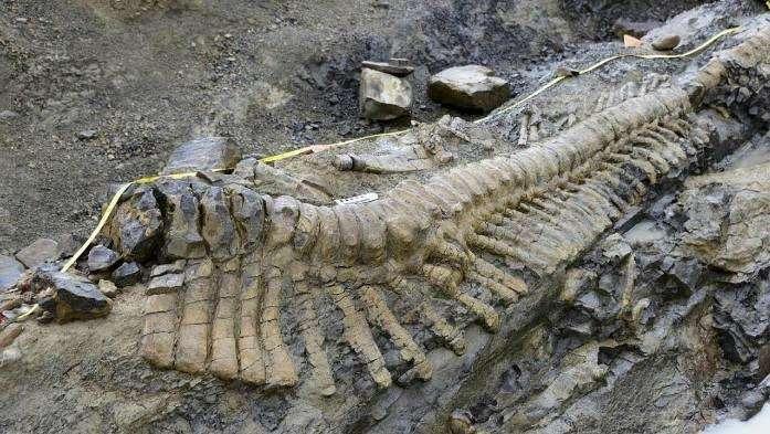 scheletro di dinosauro, isolotto Maggi