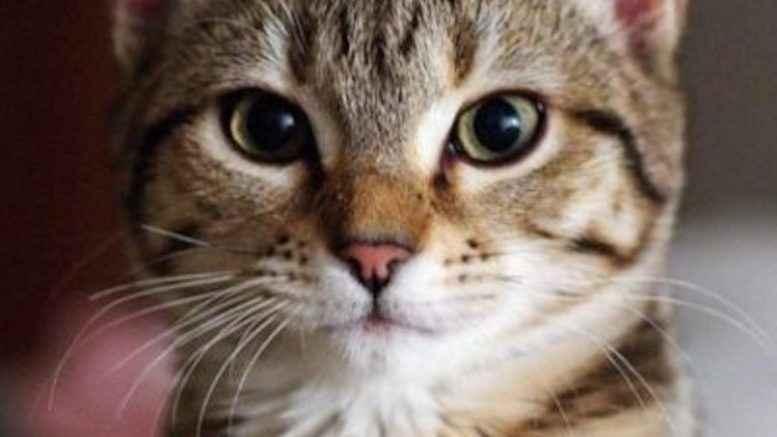 Vigili del Fuoco salvano gattino