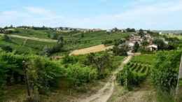 Decima edizione del Valtidone Wine Fest