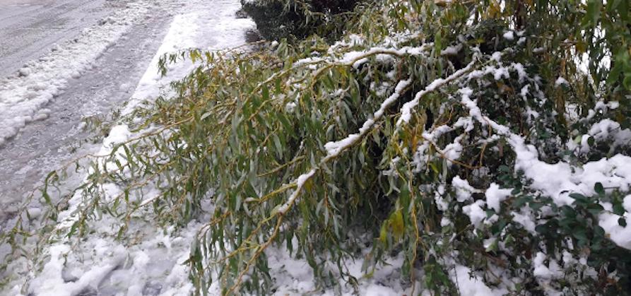 """Pioggia, sole e neve nel piacentino durante i giorni di festa, Corazzon di 3B Meteo: """"Continui cambiamenti"""" - AUDIO"""