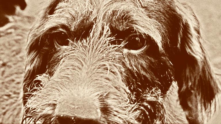 Muore e lascia la casa di Piacenza per aiutare i cani della struttura di Fiorenzuola