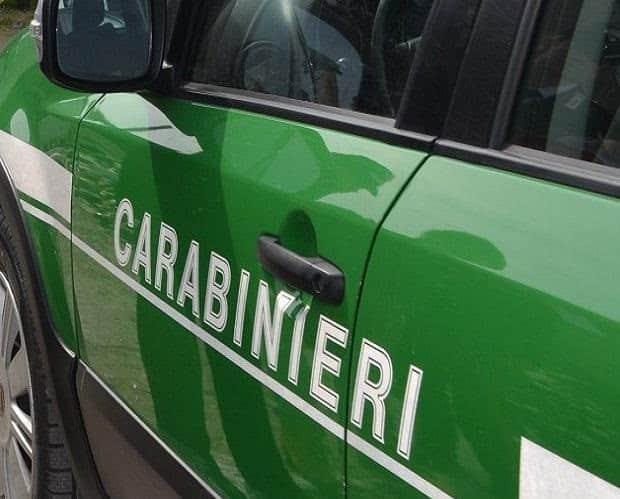 Una lupa trovata morta lungo la Provinciale tra Agazzano e Gazzola