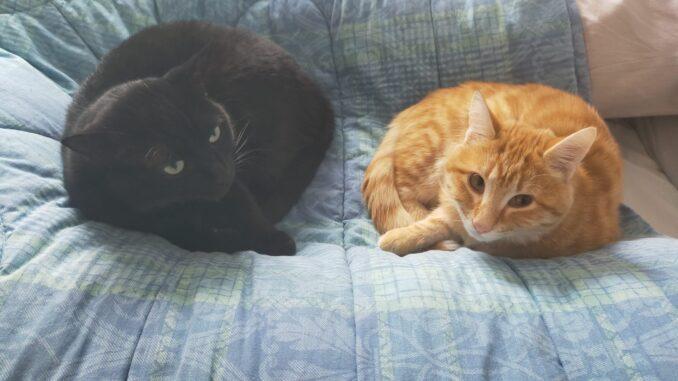 Giornata Nazionale del Gatto, una presenza fondamentale in tempo di Covid - AUDIO