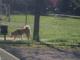 """Cani nei parchi a Piacenza senza guinzaglio, diverse le segnalazioni. Burgio: """"Tutti gli animali sono bravissimi, ma possono esserci reazioni incontrollate"""" - AUDIO"""